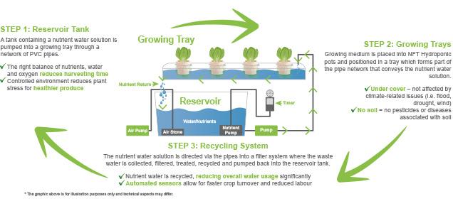 hydroponics-process-diagram