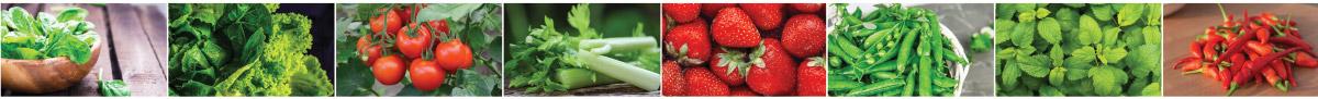 Marley Hydroponics System | Fruit and Veg